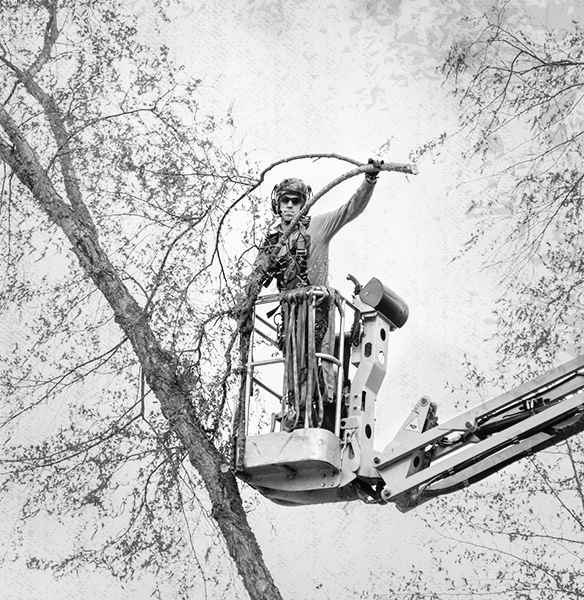 Tree Care and Arborist Industry Gear from GME Supply